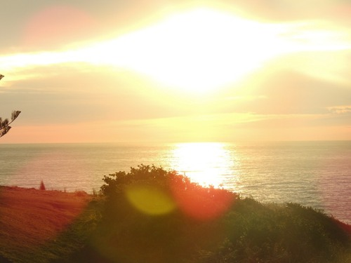 Sunrise over the ocean, peace and tranquility and fresh new energy for the day ahead. From our garden at Kiama.