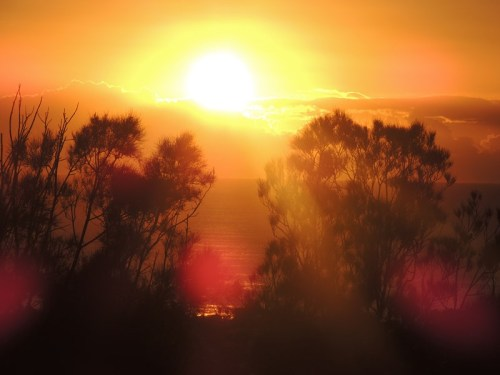 Golden sunrise over the treetops