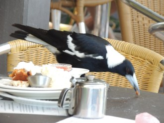 Magpie, beak full of cake, Crystal Castle