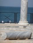 Roman Columns atCaesarea