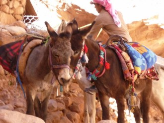 The donkey train travel at Petra