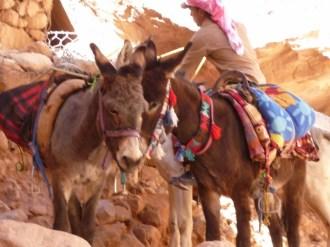 The donkey train travel at Petra