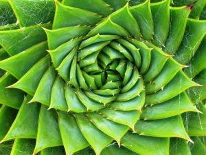 Spiral.2